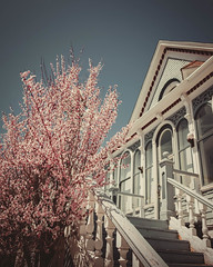 A vintage house with beautiful pink flowers around. (pedroferr) Tags: sunny flowers home windows 4x5 fujifilm stairs morning plant laketahoe diagonal antique lines pattern landscape shapes vertical facade vintage warm bluesky usa unitedstatesofamerica colorful classic building old pink house summer sky retro garden california outdoors detail color