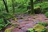 chemin pavé & chaotique (pontfire) Tags: le faouët bretagne morbihan 56 france forest chemin
