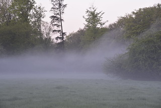 Morgennebel in Brunsholm; Bergenhusen, Stapelholm (6)