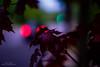 Leave at Night (YL168) Tags: 攝影發燒友 night bokeh carlights flickrunitedaward