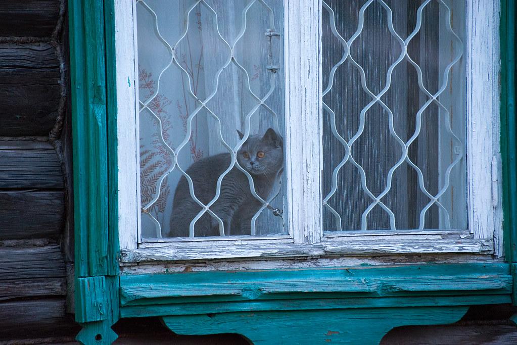 фото: Котская жизнь