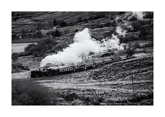Le train du parc Snowdonia ! (bertranddorel) Tags: bnw bn nb bw noiretblanc blackandwhite mono monochrome nikon tamron paysdegalles snowdon parcsnowdonia europe vapeur loco landscape