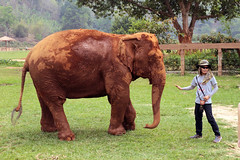 Elephant and Guide (Tim Aldworth) Tags: elephantnaturepark eos7d thailand chiangmai elephant elephants reserve sanctuary rescue rescuecentre