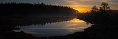 Sunrise reflections (talaakso) Tags: auringonnousu d610 finland finnishlandscape heijastus nikond610 soluppgång sonnenaufgang sunrise sunrisereflections tammela terolaakso torronsuonationalpark torronsuonkansallispuisto vedenpinta waterreflection finnishpanorama marsh myr myrmark naturelandscape naturepanorama panoraama panorama reflection reflexion silhouette silhuetti sunrisepanorama suo talaakso tavastiaproper fi