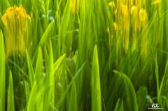 Esperimenti / Experiment -  #2 (Abulafia82) Tags: pentax pentaxk5 k5 ricoh ricohimaging colore colors color colori acolori natura nature fiore fiori flower flowers piante plants pianta plant flora
