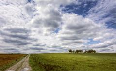 Francia : Mont /s Vaudray (Roberto Defilippi) Tags: 2018 322018 rodeos robertodefilippi nikond7100 tokina1116mmf28 francia france landscape paesaggio cielo sky clouds nuvole alberi trees field