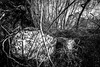 fallen headstone (primemundo) Tags: gravestone cemetery knockedover cross crucifix abandoned forgotten overgrown