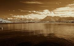 Thuner See (Adventures in Infrared) (Torsten Reimer) Tags: thun olympusepl5 europa see himmel switzerland berge lake clouds infrared schweiz sky swan mountains infrarot wolken europe bern ch