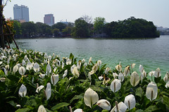 HAN_HoanKiemLake_01 (chiang_benjamin) Tags: hanoi vietnam hoan kiem lake flowers