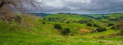 Eriador (Claude Downunder) Tags: eriador amulsul weathertop lordoftherings jrrtolkien tolkien grass trees hills cliffs newzealand nz northisland waikato portwaikato