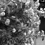 Just flowers thumbnail
