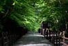 Aomomiji (walkkyoto) Tags: 青紅葉 aomomiji 光明寺 komeiji 寺 temple 神社 shrine 京都 kyoto 日本 japan ef135mmf2lusm