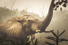 mighty (andy_8357) Tags: sony sel55210 55210mm brush bush a6000 alpha mirrorless fog elephant beautiful dignified gentle amazing ilce6000 ilcenex 6000 india wild large mighty big new delhi national zoological park f45f63 oss zoom emount e mount zoo