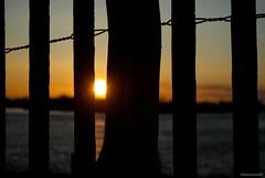 Peeking through.... (Joe Hengel) Tags: peekingthrough lowerslowerdelaware lsd lewes lewesde sussexcounty delaware darkness sunset sun sunlight water watchingthesunset rooseveltinlet inlet fence fenceline sandfence silhouette silhouettes sunburst
