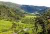 Rice terraces, Bali (scinta1) Tags: bali balinese tabanan riceterraces sawah view hillside palms green valley
