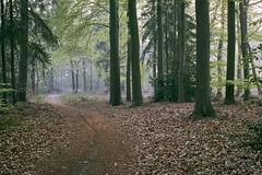 path (Jos Mecklenfeld) Tags: forest wald bos nature natur natuur hiking wandern wandelen spring lente frühling sonya6000 sonyilce6000 minoltamdwrokkor35mmf28 minoltamd minoltalens minolta terapel groningen netherlands nl