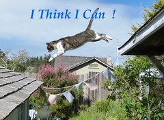 Positive Thinking  & Flying (Room With A View) Tags: wiki cat leap jump odc