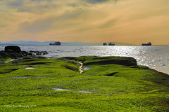 a greenway (Eyesplash - Summer was a blast, for 6 million view) Tags: green rock rocks outcropping plateau costal westcoast canada britishcolumbia sunset mountains pacificocean tide tidal low lowtide ship container waiting harbour harbor spring season 2018 reflection sunlight clouds