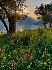 Springtime... (mau_tweety) Tags: sunset tramonto mountains monti grass erba albero tree reflections riflessi water acqua lake lago primavera spring flowers fiori prato meadow