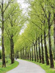 Lente in de Betuwe (Shahrazad26) Tags: lente spring printemps frühling voorjaar betuwe gelderland nederland thenetherlands holland paysbas bomen trees arbres