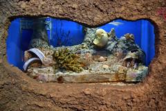 DSC_0297 (Cha già José) Tags: kualalumpur malaysia malaisie klcc aquarium aquaria
