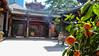Incense (MrTheEdge7) Tags: singapore singaporesingapore southeastasia asia global globe temple chinese buddhist buddhism ritual religion plant plants incense smoke burning tree trees fruit asian architecture