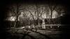 Nye Cemetery - Muscatine Iowa (Oliver Leveritt) Tags: nikond610 afsnikkor1635mmf4gedvr oliverleverittphotography wideangle iowa cemetery graveyard headstone grave burial nye nyecemetery muscatine benjaminnye monochrome blackandwhite sepia platinum