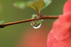 goutte d'eau colorée. ( UNIXetvous ) Tags: goutte drop nature eau water reflets reflections dropofwater canoneos5dmark3