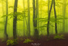 The fog (Mimadeo) Tags: forest spring sun ray beam sunrays sunbeams sunshine shine mist fog morning sunlight sunny light landscape misty tree outdoor beams beautiful foggy nature beech idyllic bright magic fantasy dreamy mood moody atmosphere atmospheric yellow green springtime