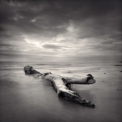 Erie Drift Log (Joe Iannandrea) Tags: ishootfilm filmphotography hasselblad blackandwhite landscape seascape nature hasselblad503cx fujiacros pmkpyro outdoor water lakeerie beach shore forterie ontario canada log driftwood carlzeissdistagont50mmf4