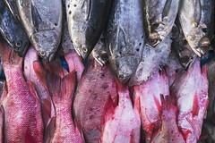(Pigoora | Love Trough The Lens) Tags: fishmarket fish sigma30mmf14dcdn still a6500 stilllife jakarta port street seaside