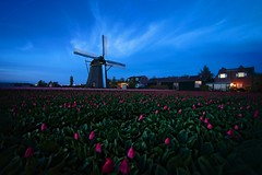 Hoogeveense Molen te Noordwijkerhout (l.cutolo) Tags: netherlands onesoftware sonya7ii northholland dutchlandscape tulips flickr landscape purplesunsetsky flowers sony perfecteffect hollandscape dutchscape saturation windmill cloudstrips hdr lucacutolo digitalblending onone worldtrekking sunset vignette tlp bloomen tulip red raw2018 worldtrekker pink ngc noordwijkerhout bluehours hoogeveensemolen highcontrast sonyfe1635mmf28gm