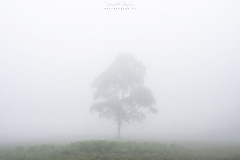 Solitario (diegogm.es) Tags: olympus omd em5 niebla fog arbol tree micro43 microfourthirds microcuatrotercios minimalismo