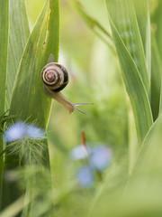 Ravageur des iris *-*-- ° (Titole) Tags: snail leaves green titole nicolefaton iris storybookttwwinner