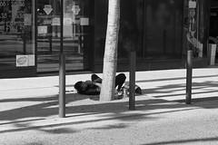 Wake up man (ZUHMHA) Tags: marseille france urban urbain personnes people gens human humain scènedevie monochrome vitre vitrine verre glass letter lettre mot word sign texte text écriture reflet reflection line lignes courbes curve geometry géométrie