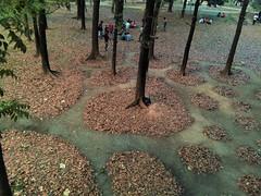 Art can be anywhre (emon.vq) Tags: art activity landart liveact lines landscaping contemporaryart fineart fallenleaves publicart park boomwork urbanpark artist muhammadzakir dhaka bangladesh