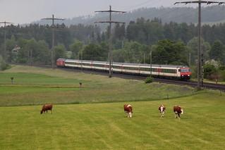 SBB Lokomotive Re 460 mit EW IV IC Intercity Zug zwischen Gümligen und Rubigen im Kanton Bern der Schweiz