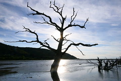 The Tide is High (grigorisgirl) Tags: marsh hightide exmoor porlock porlockmarsh