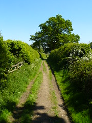 Herberts Hole (cycle.nut66) Tags: herberts hole pednor land off road hedges hedgerow tree sky sunny sunshine bridleway chiltern hills chilterns may 2018 early summer fresh panasonic lumix fz8 leica elmarit