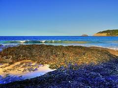 Depot Beach V (elphweb) Tags: hdr highdynamicrange nsw australia beach water lake sea ocean sand sandy seaweed waves surf
