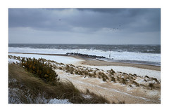 Beast from the East (Steven Docwra) Tags: beastfromtheeast norfolk caister eastanglia snow winter gales wintery scene dunes drifts roughsea sea birds