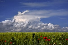 Clouds and Spring fields (Peideluo) Tags: spring nature naturaleza campo paisaje nubes clouds green flowers landscape colors hierba cielo elitegalleryaoi bestcapturesaoi