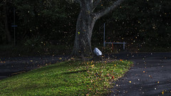 Windy today (Ian@NZFlickr) Tags: wind leaves fall autumn olveston queens drive dunedin nz gust