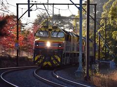 Sweeping Through Autumn (pacnat22) Tags: ssr 1845 faulconbridge gclass brmclass kelsoflyer freight train autumn bluemountains