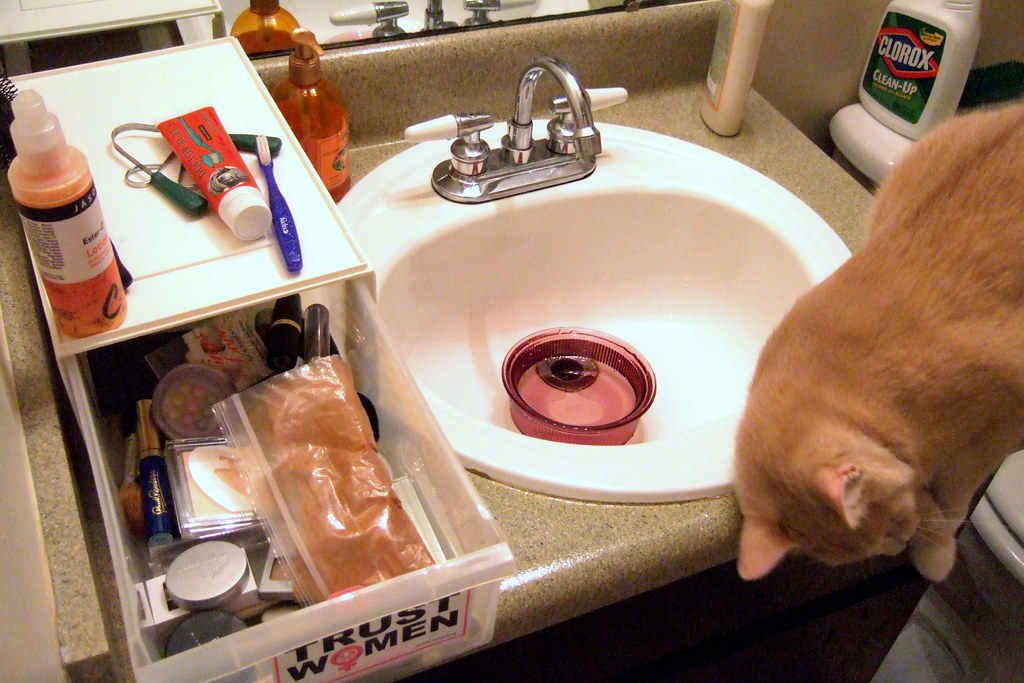 Image result for cat playing with makeup on bathroom counter