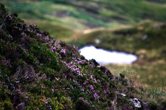 Heather (DaveSinclair) Tags: scotland hiking heather hillwalking corbet davesinclairpics trosachs therandomselection