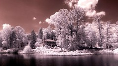 Waterfront Property (zachstern) Tags: trees wallpaper tree landscape ir arbol pond tr boom dell rbol infrared charlottesville   universityofvirginia uva albero tre puu arbre rvore strom baum trd  infravermelho    copac infrarot   drzewo charlottesvilleva   stablo infrarrojos   wahoowa infrapuna infrarood infrarouge  infrarossi toyir    inframerah      infravrs  infraerven