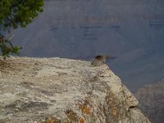 P1040990 (marinaneko) Tags: grand canyon tz1 06081417