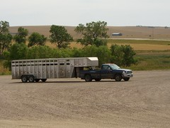 Modern Cowboys use pick-up trucks and big trailers