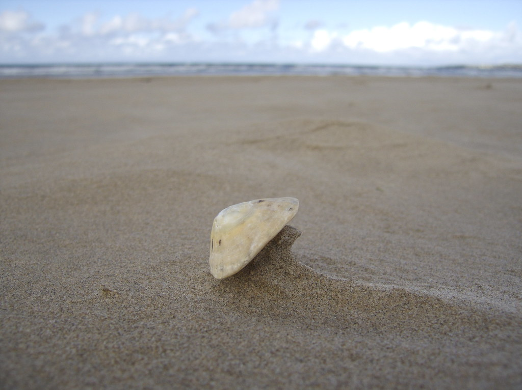 Shell & wind
